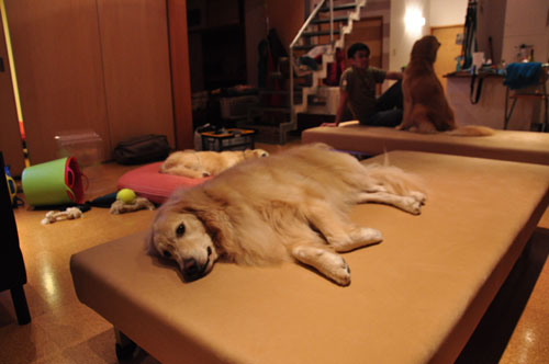 ドッグソファ兼デイベッド 大型犬と一緒に過ごす方の為のラムース生地 6013イメージ-2