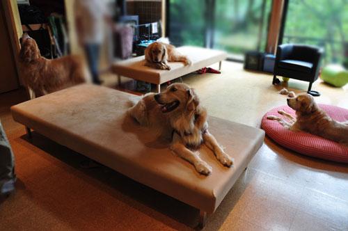 ドッグソファ兼デイベッド 大型犬と一緒に過ごす方の為のラムース生地 6013